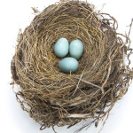 Focus on building your nest egg